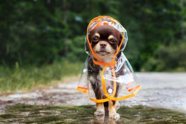 <p>The best raincoats for staying dry and looking good this summer </p>