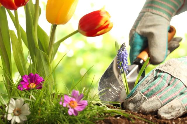 <p>Best garden trowels UK 2021 </p>