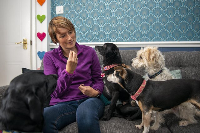 Sarah Knowles is set to launch the WooF Hub Ltd, offering doggy day care and training. Sarah is pictured with her dogs Arlo, three, Zoom, seven, Scampi, three and Willow 14