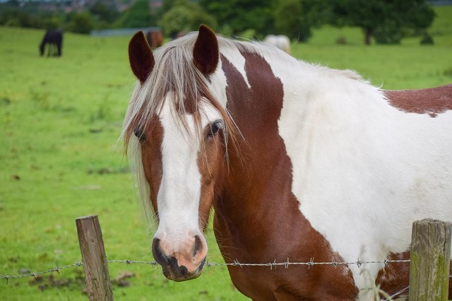 """""""I am urging people to stop feeding any equine that does not belong to them as this can cause serious illness and be potentially life threatening."""""""