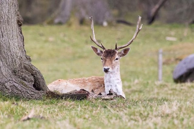There has been an increase in collisions involving deer.